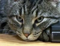 cat found on Île Charron