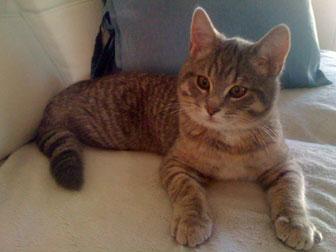 kitten found in Laval