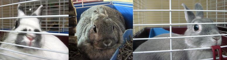 3 bunnies found