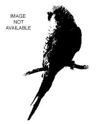 Orange bird found in Rosemont