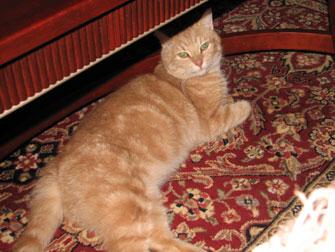 cat found in Saint-Lazare