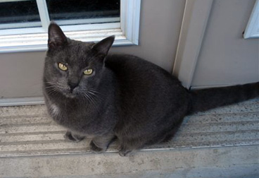 cat found in Ville-Marie