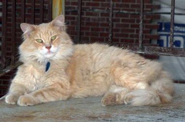 cat lost in St-Michel