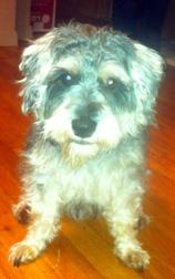 dog found in Hochelaga-Maisonneuve