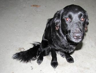 dog found in Ste-Sophie