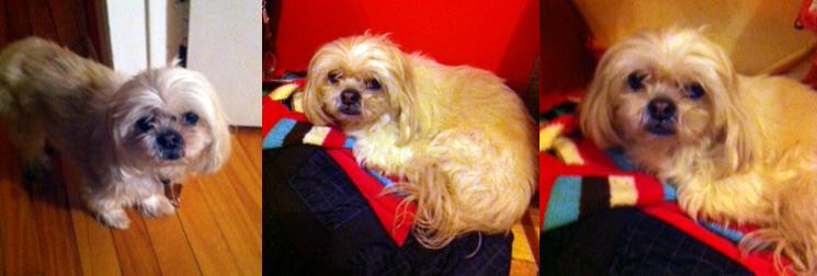 Dog found in Ville-Emard