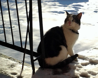 cat found in Laval-des-Rapides