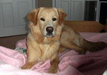 dog found in Montmagny