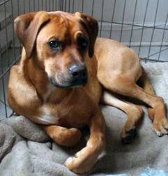 dog lost on Mont Royal
