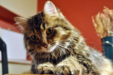 cat from Ste-Adèle