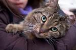 cat-found in N.D.G.