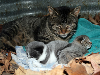 mother cat found in Oka