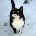 cat found RDP