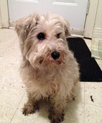 dog found in Montreal West