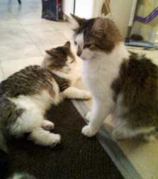 Two cats found in Mirabel