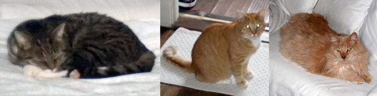 3 cats lost in Monteregie
