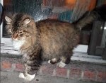 Tabby  found in Charlemagne