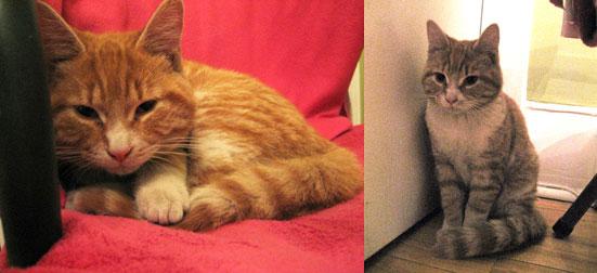 cat found at Jean-Talon