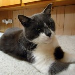 cat found in Longueuil