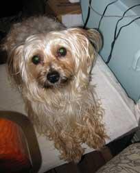 dog found in Rivière de Prairie