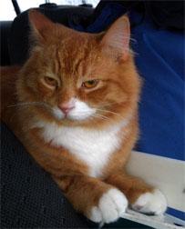 Puss-Puss