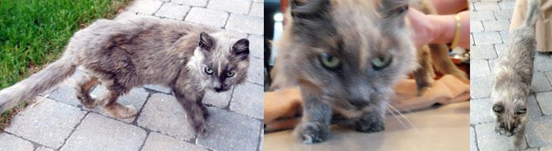 cat found in Bellefeuille