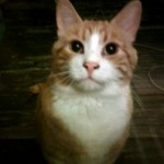 cat found in LaPlaine