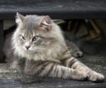cat found in Pierrefonds
