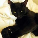 black cat found in the Plateau