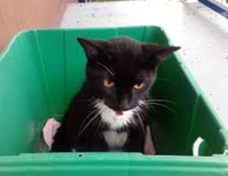 injured cat found in Verdun