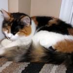 cat lost in La Plaine