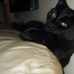 cat lost in Montcalm