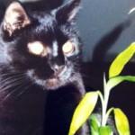 cat lost in Saint-Lazare