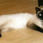 cat lost in les Coteaux