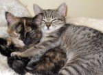 cats found in l'Acadie