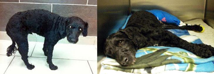 injured dog found in St-Michel