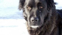 dog lost in Montcalm