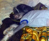 dog lost in Pierrefonds