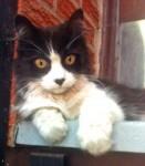 kitten found in the Plateau