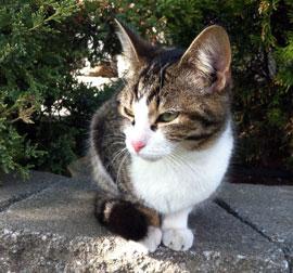 kitten found in Ste-Rose