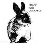 bunny-x