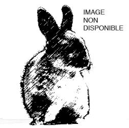 bunny-xf