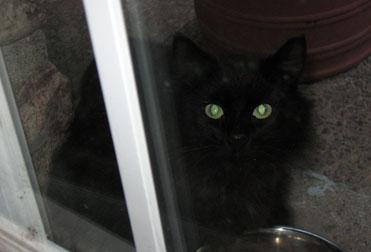 cat found in Notre-Dame-De-L'ile-Perrot