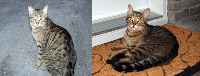 cat found in Ste-Anne-de-Belleuve