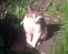 cat lost in D.D.O.