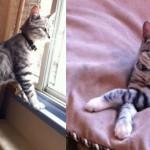 cat lost in Dorval