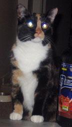 cat lost in McGill-Ghetto