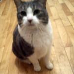 cat-lost-Boucherville