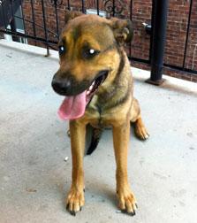 dog found in Parc-Lalancette