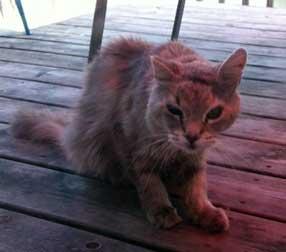 injured cat found
